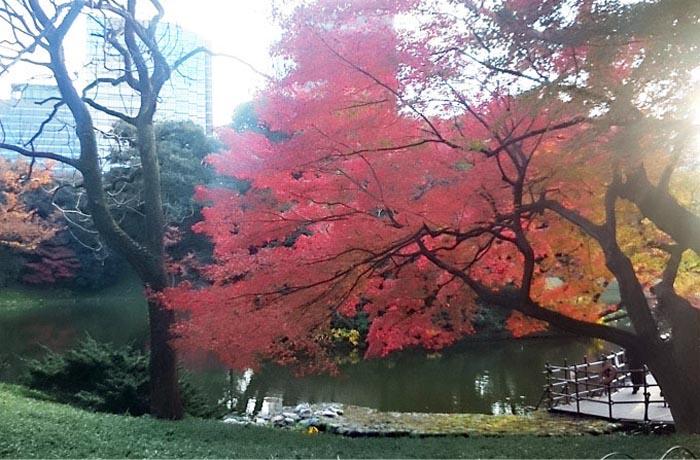 紅葉 - 小石川後楽園